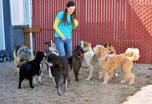 Dogs playing at Zipidy Do Dog Daycare